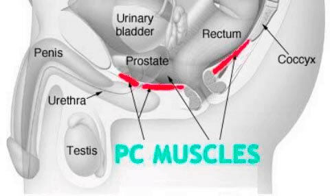pc muscles